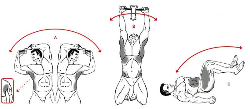Isokinator-Training-Muskelgruppen