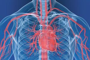 Herz-Kreislauf-300