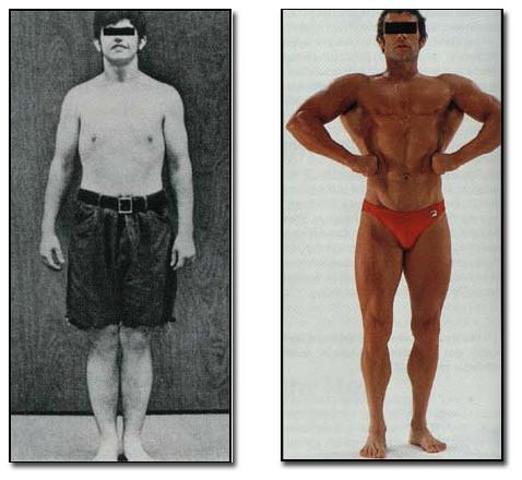 Nur 7 Muskelgruppen formen den menschlichen Körper