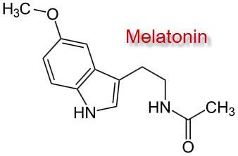 Wer auf Kraft trainiert, bildet wertvolles Melatonin