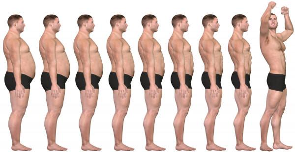 Wie die Muskulatur unsere Gesundheit steuert